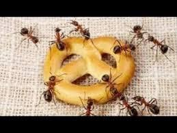 Photo of طرق سحرية للتخلص من النمل