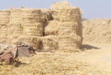 Photo of الزراعة: جمع وتدوير أكثر من 1.9 مليون طن قش أرز في 6 محافظات