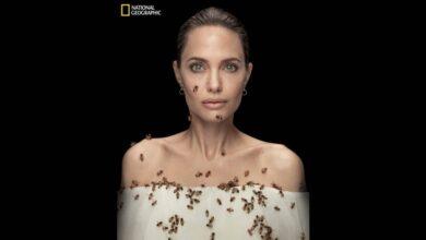 "Photo of بيومه العالمي.. «النحل» في لقطة تذكارية مع "" أنجلينا جولي"""
